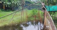 দোয়ারাবাজারের নদী-খালে দেশি মাছের আকাল
